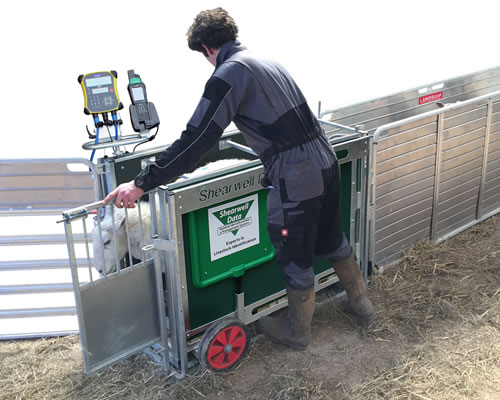 Shearwell EID Weigh Crate